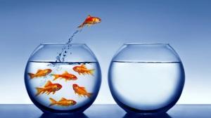 Pesce-rosso-sceglie-di-cambiare-vasca