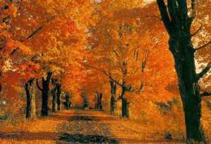 Magari una sera d' autunno, magari intorno alle sei, magari mentre mi avventuro verso casa!