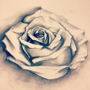 Il tocco di una rosa